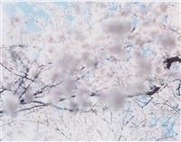 sakura 07, 4-87 by risaku suzuki