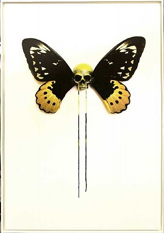 flutterdie (black & yellow) by d*face