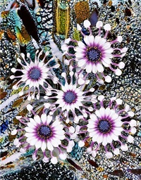 spinning cineraria (virgin man eater) by christopher beane