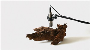 25 woodworms, wood, microphone, sound system by zimoun