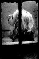 #26 window series by merry alpern