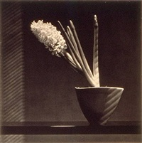 hyacinth by robert mapplethorpe