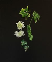 plant plant by mark fairnington
