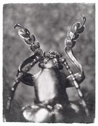 kabinettstückchen (käfer) by gregor törzs