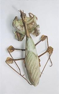 specimen 13 by mark fairnington