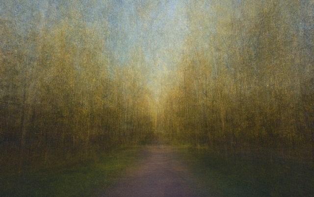 path 16 by eeva karhu