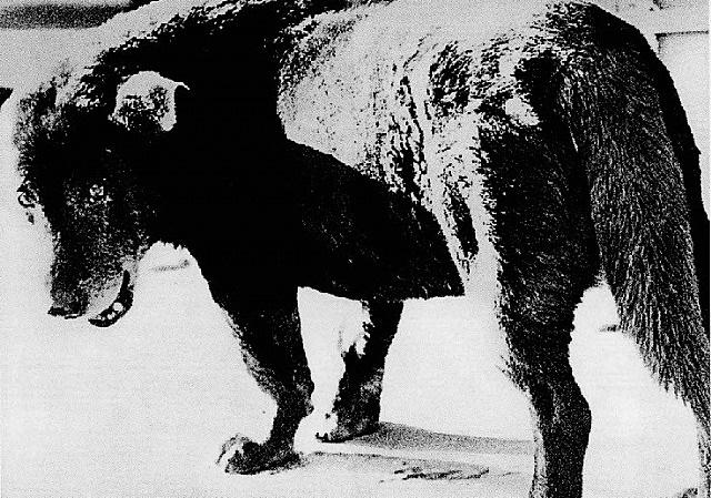 misawa (stray dog) by daido moriyama