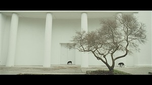 giardini by steve mcqueen