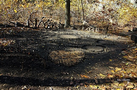 inwood forest by charles martin
