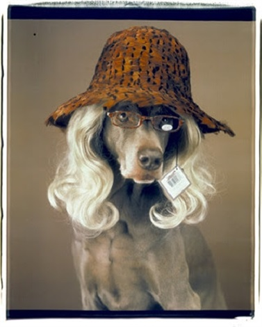 reader by william wegman