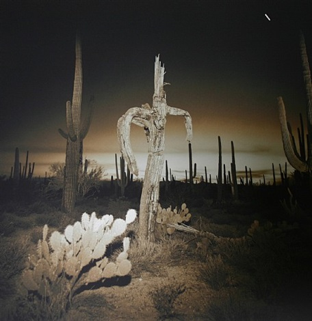 saguaro cactus, 1975 by richard misrach