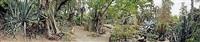 huntington botanical garden, san marino, california, desert garden nursey with succulent collections donated by virginia martin and seymour lyndon, spring 2005. (overcast) by scott mcfarland