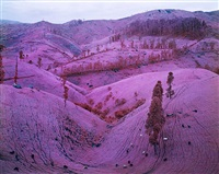 taking tiger mountain by richard mosse