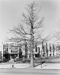 bald cypress, northern boulevard, queens 2011 by mitch epstein