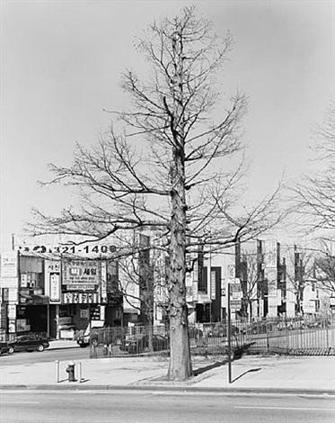 bald cypress, northern boulevard, queens 2011 by mitch epstein