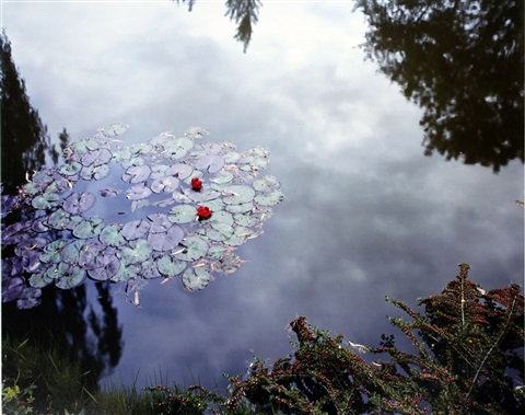giverny 24 waterlilies by stephen shore