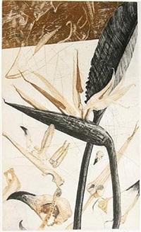 strelitzia by nall