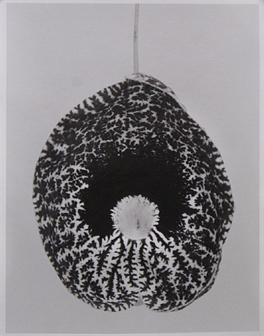 aristolochia elegans by federico rubio