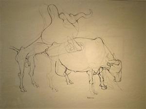 two bulls mating by dumile feni-mhlaba (zwelidumile mxgazi)