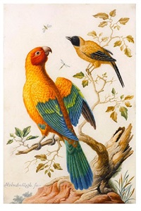 a sun conure parrot and a yellow-backed oriole by herman henstenburgh