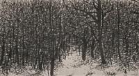 forest in winter by nguyen bach dan