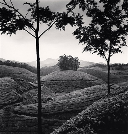 tea estates, study 1, munnar, india by michael kenna