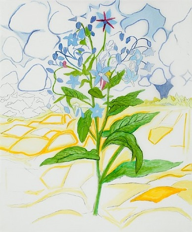 borage drawing by john arden knight