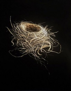 robin nest autumn by mitchell lonas