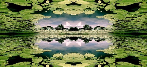lily pad heaven by erin dinan