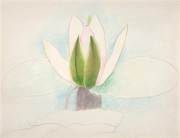 pink and green waterlily by joseph stella
