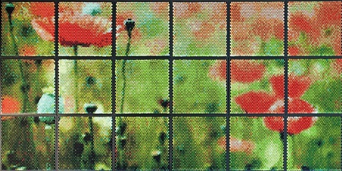 poppies by christian faur