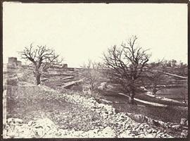 chênes en hiver (oak trees in winter) by charles nègre