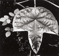 leaf and rain drops by brett weston