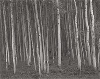 aspen grove #2, aspen, co by george tice