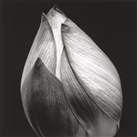 untitled (closed plant bloom) by yasuhiro ishimoto