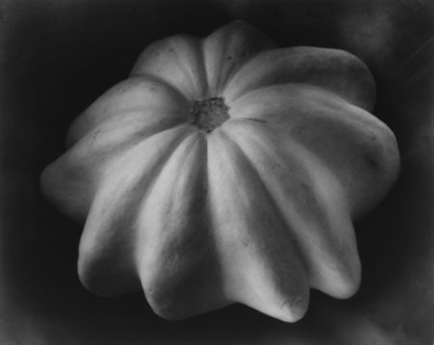 winter squash by edward weston