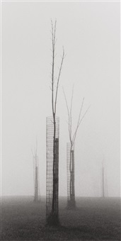 fenced trees by michael kenna