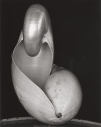 shell #14 by edward weston