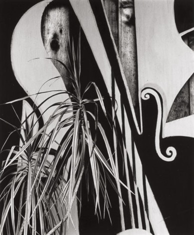 untitled plants and shapes by brett weston