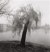 moving tree, prague, czechoslovakia by michael kenna