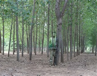 hiding in the city no. 94: in the woods by liu bolin