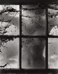 nude behind cobwebbed window by wynn bullock