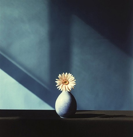 african daisy by robert mapplethorpe