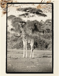 untitled (giraffe) by peter beard