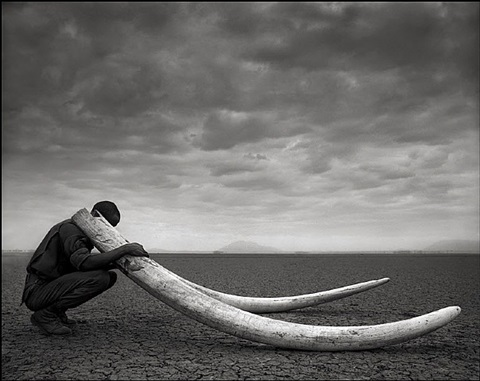 ranger with elephant tusks by nick brandt