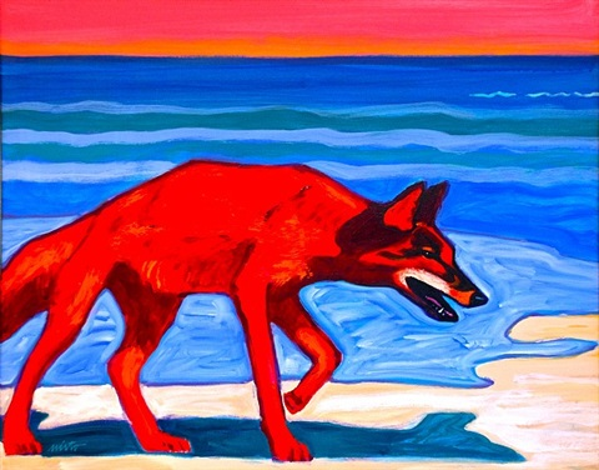 red coyote on beach by john nieto