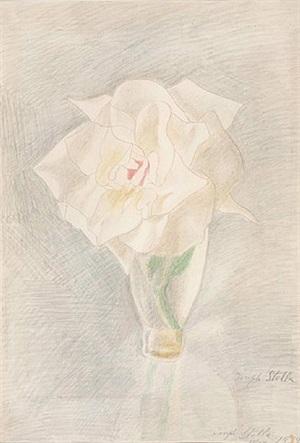 the white rose by joseph stella