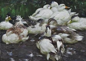 ducks by alexander max koester