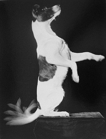 jackie wags his tail by harold eugene edgerton
