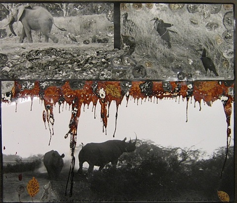 untitled (rhino with elephant and birds) by peter beard